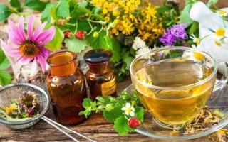 Травы при гастрите: какие и как правильно применять в терапии