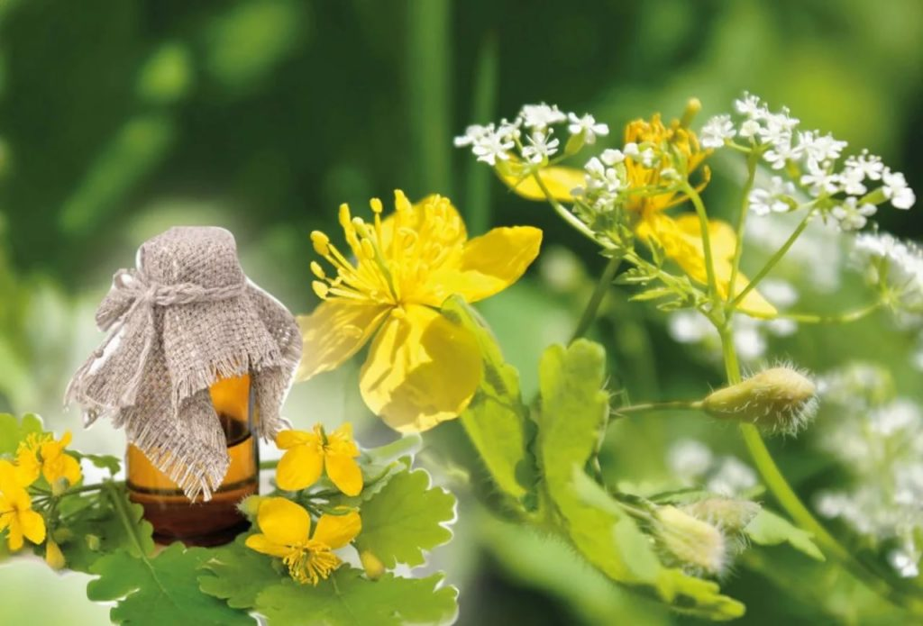 травы для лечения гастрита