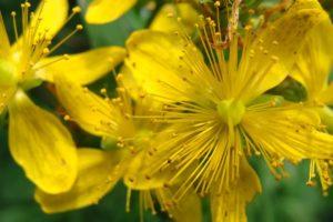 лечебные травы при гастрите